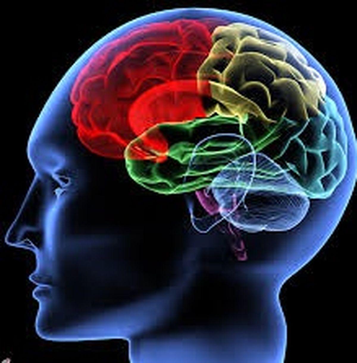 درباره عجایب مغز انسان بیشتر بدانید