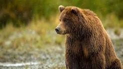 تلاش جذاب توله خرس برای دوستی با آهو+ فیلم دیدنی