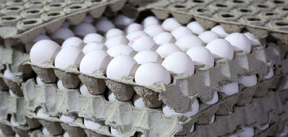 تخم مرغ99/قیمت جدید تخم مرغ اعلام شد!+جزئیات