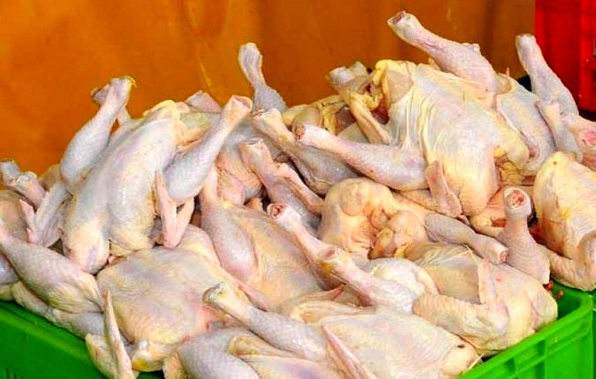 قیمت وحشتناک مرغ در بازار| مرغ کمیاب شد
