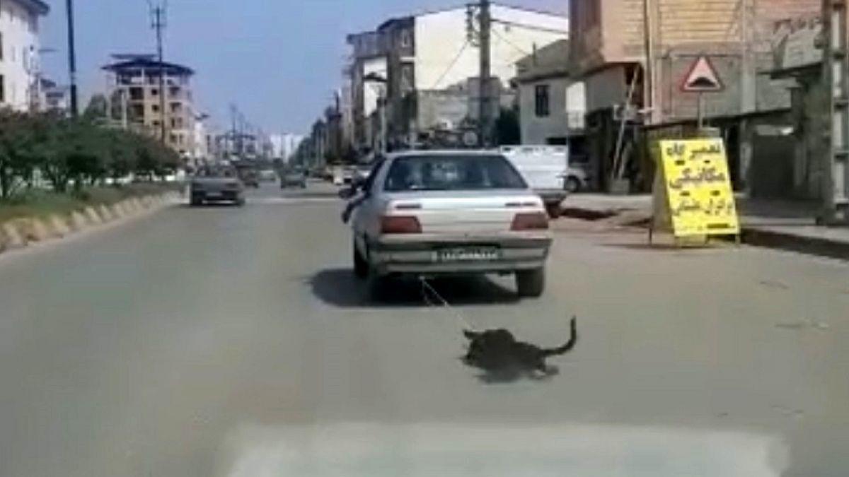 فیلم هولناک از حیوان آزاری فجیع دهیار یک روستا!