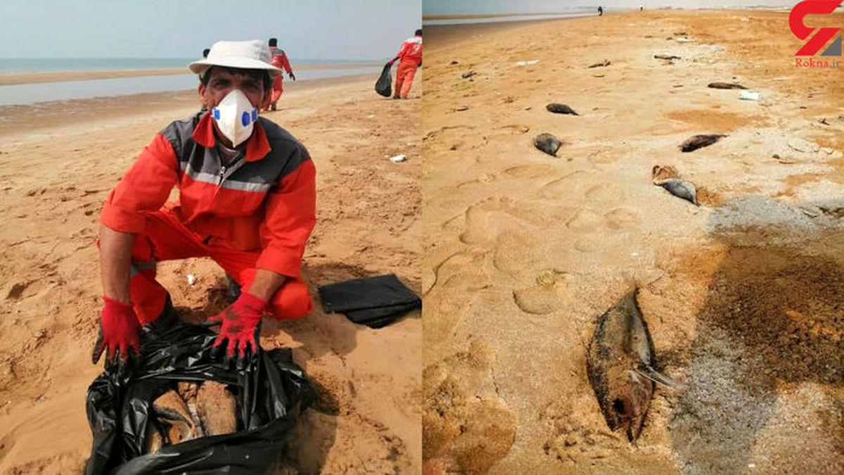 مرگ هزاران ماهی تن  در ساحل بوشهر+ عکس