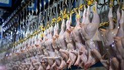 خرید و فروش مرغ قاچاقی شد/ قیمت مرغ قاچاق چند؟